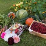 plant a garden to save money