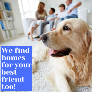 Great Homes In Charlotte: Pet-Friendly Realtors