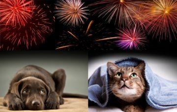 Keeping pets safe during fireworks