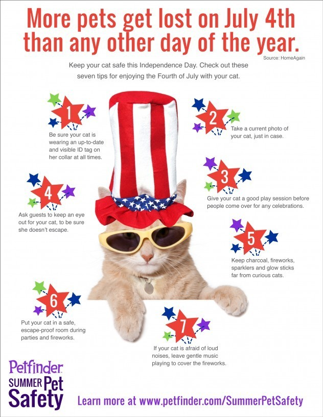 Keep your cat safe during july 4th celebration